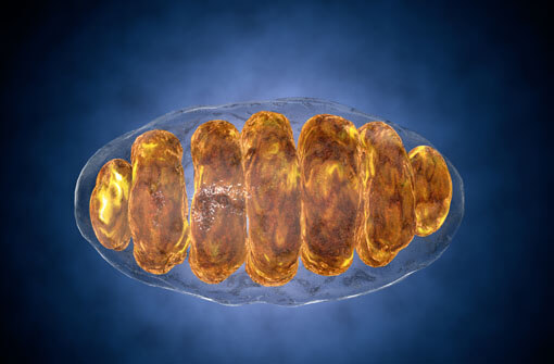 mitochondrien-therapie